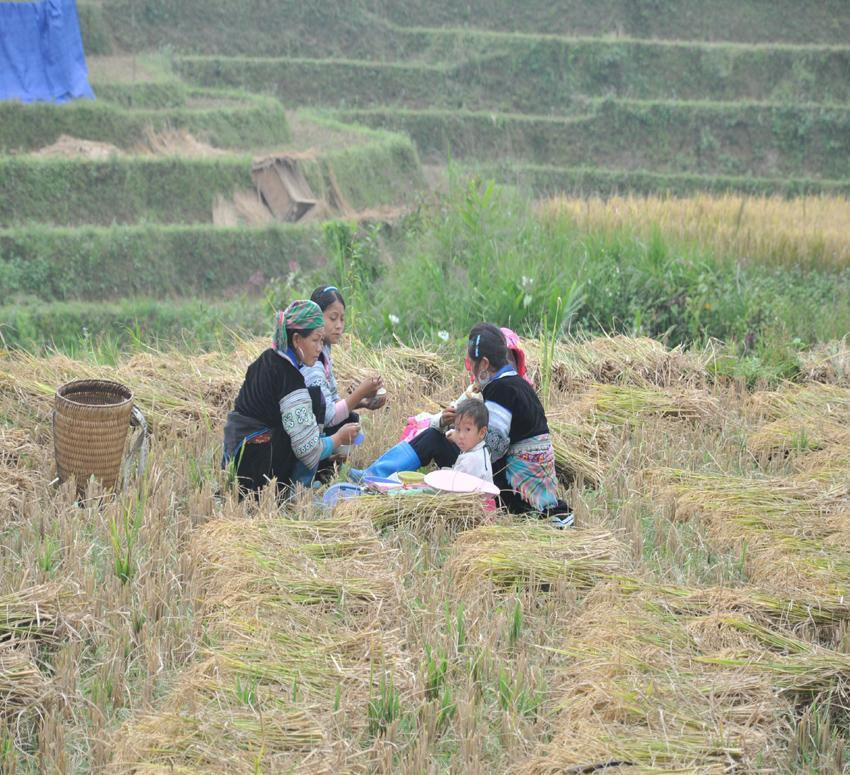Sapa Trekking 3 days  minority 2 night village stay